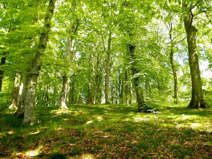 Der Buchenwald der Granitz beginnt direkt hinter dem Garten