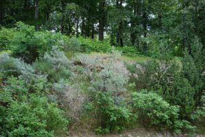Blick aus dem Garten in den Wald der Granitz