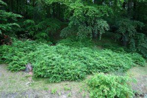 Blick vom Balkon in den Wald der Granitz